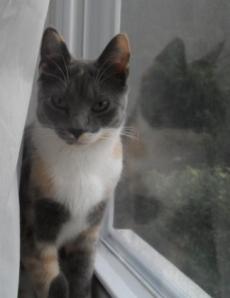 charlotte_window